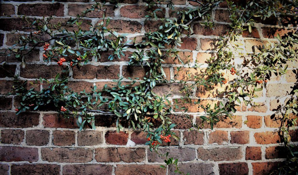 Betonnen muurafdekker